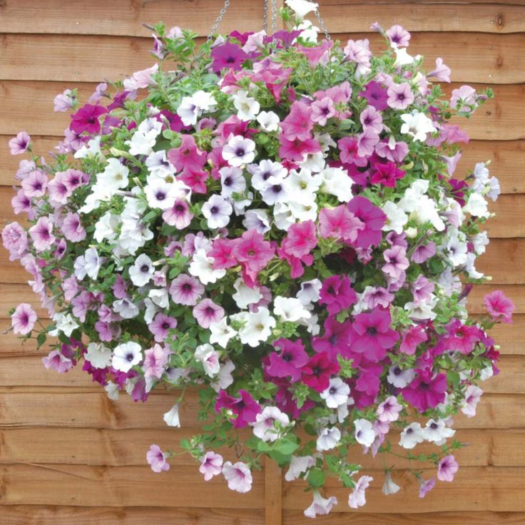 Best Flowers For Hanging Baskets Flowers Flower Plants Annual Plants Lucky Dip Basket