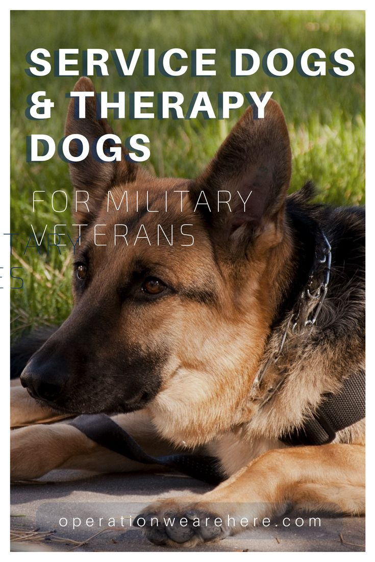 19 best ptsd tbi military caregiver combat veteran for Best dogs for companionship