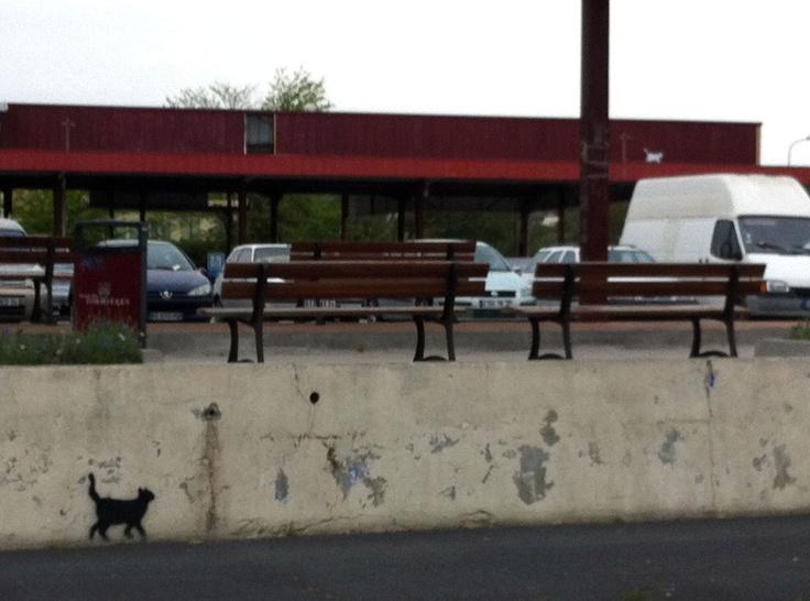Le Chat #11... a repéré la bell'gosse blanche sur le toit