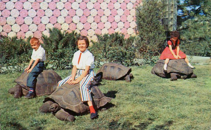 1960s Black Hills Reptile Gardens Rapid City South Dakota Retro Travel Pinterest Gardens
