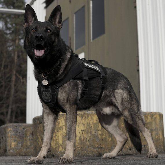 Tactical Military Cargo Dog Vest Heavy Duty Harness Many