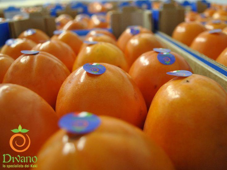 Divano's ROJO BRILLANTE persimmons are still available: Info: www.divanosrl.it/en.  I kaki ROJO BRILLANTE della DIVANO S.R.L. sono ancora disponibili.  Info: www.divanosrl.it +39 0823 604052