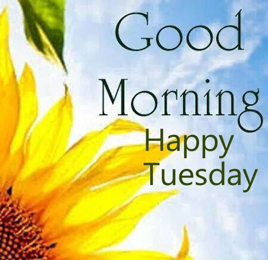 Good Morning Quote Happy Tuesday Pictures, Photos, and Images for Facebook, Tumblr, Pinterest, and Twitter