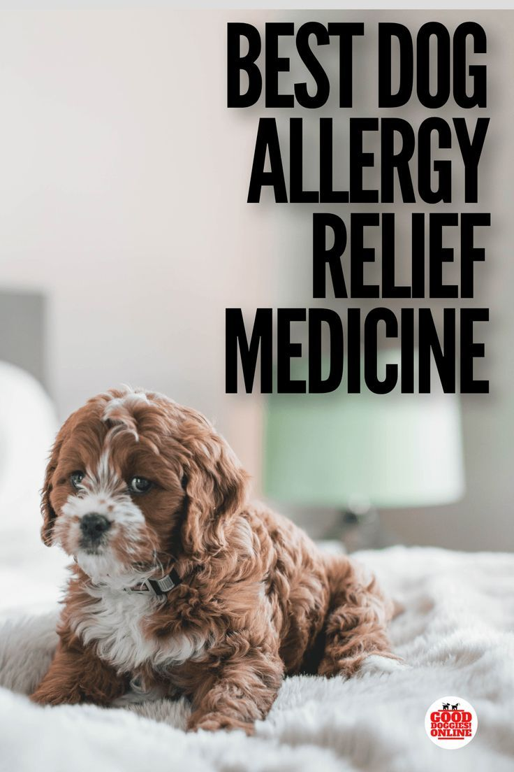 The Best Dog Allergy Medicine For Itch Relief Dog Allergies Dog Allergies Relief Dog Skin Allergies