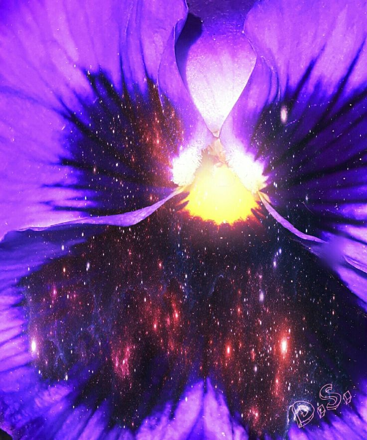 Space in a flower 🌌