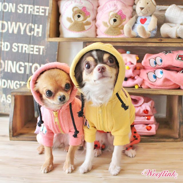 These tiny pups look adorable in their colorful zip-up dog hoodies. | The Secret Life of Pets