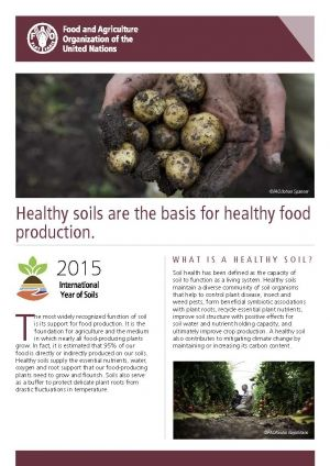 Healthy soils are the basis for healthy food production! It is estimated that 95% of our food is directly or indirectly produced on our soils.
