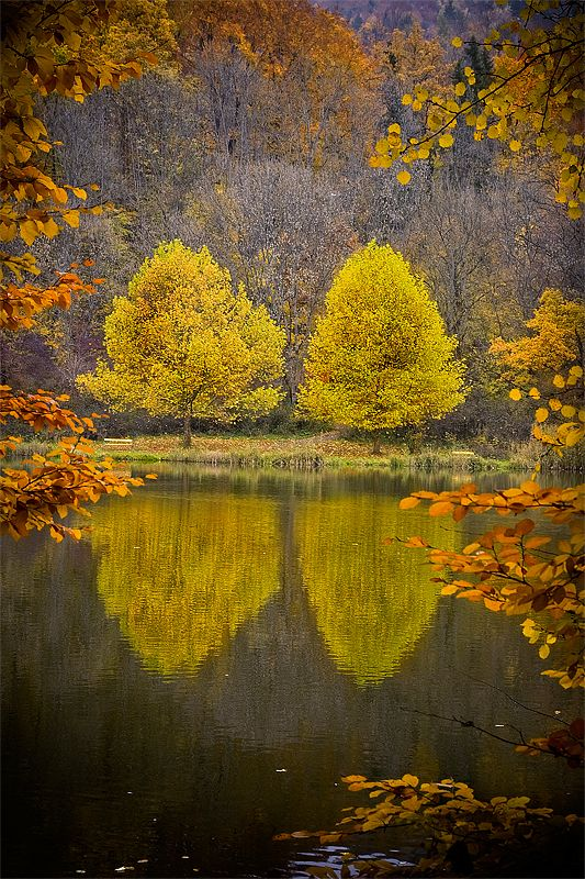 Four Trees In A Frame - Erwin Scheriau