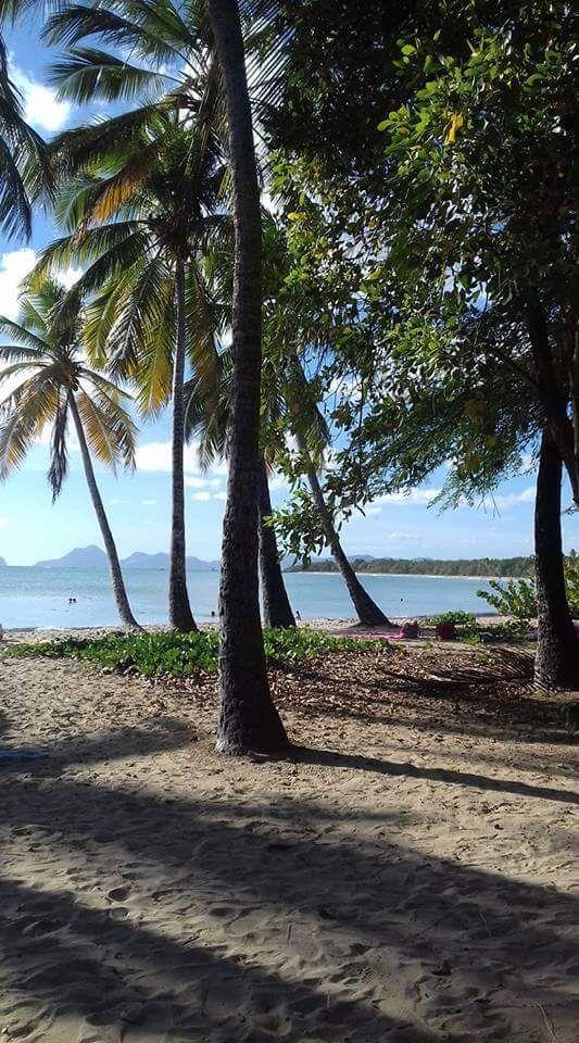Salines beach. Sainte Anne. Martinique