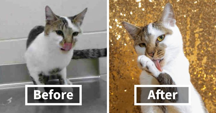 10+ Before & After Photos That Prove Why Animal #Shelters Need Good Photographers