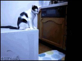 Troll cat.