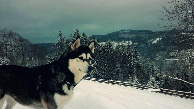 Alaskan Beauty by MagdalenaaM.deviantart.com on @DeviantArt   #landscape #photography #mountains #mydog #mylove