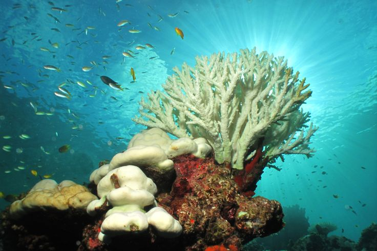 Shocking Before-and-After Photos of the World's Coral Bleaching Catastrophe | Atlas Obscura