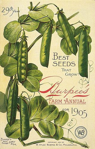 Burpee's seed catalog 1905 cover