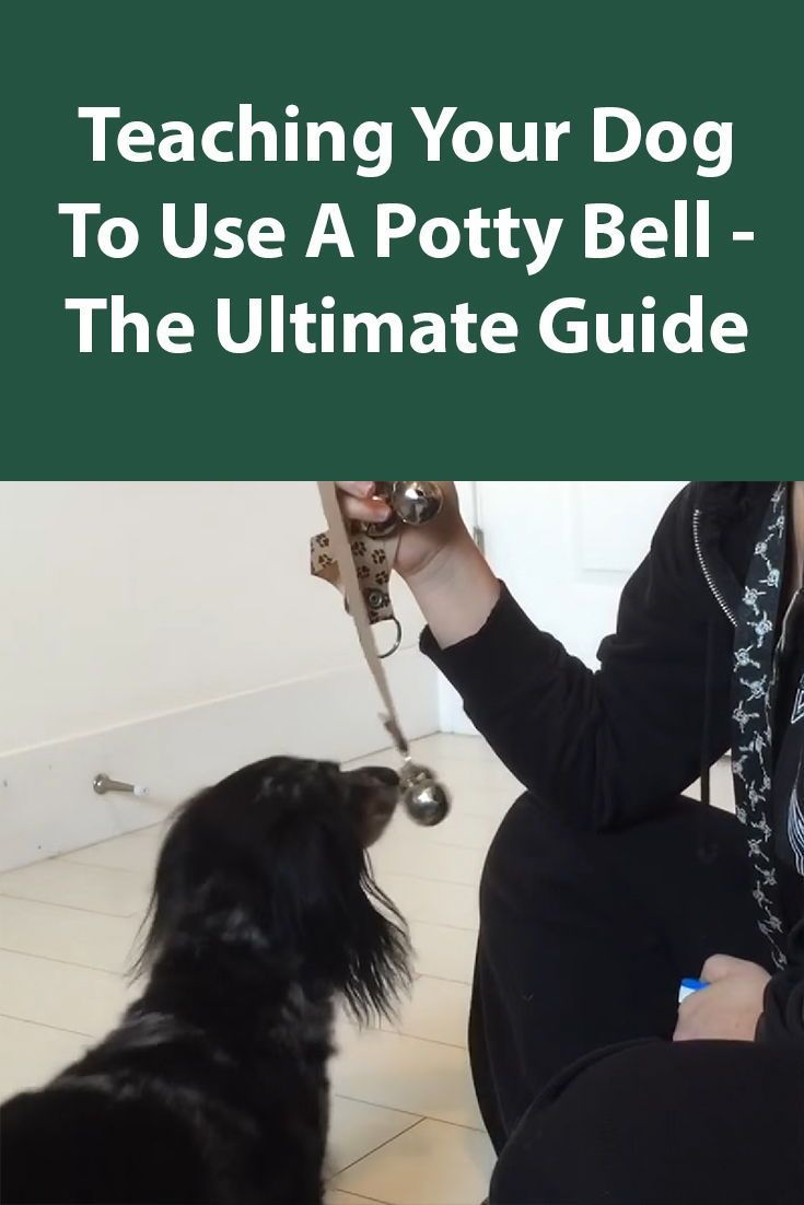 Train Your Dog To Use A Potty Bell To Go Outside Dog Training
