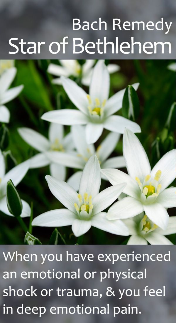 Bach Flower Remedy - Star of Bethlehem - An important remedy for those experiencing bereavement, birth trauma, serious accidents, and other traumatic life events.