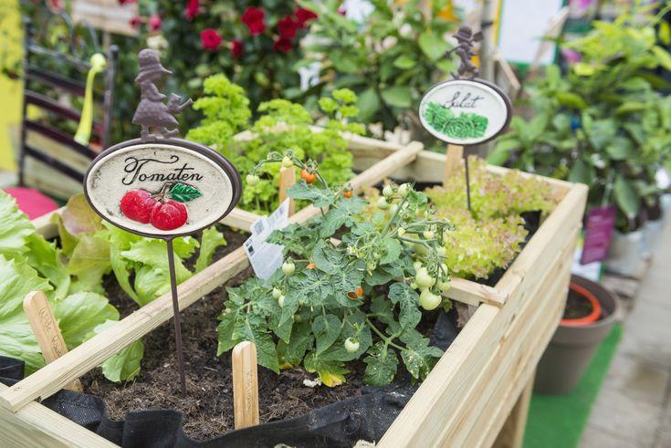 Het is zonde om stukken van groenten weg te gooien, als je ze kan planten tot een nieuwe struik. Zie hier welke groenten je zelf kan kweken.
