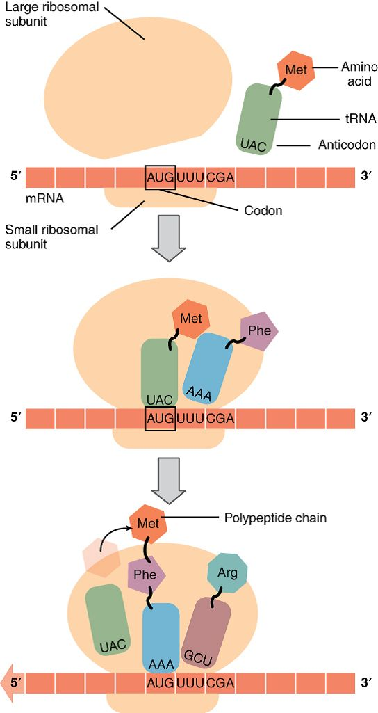 17 best Cell Biology images on Pinterest | Cell biology, Protein and ...