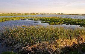 Rietvlei wetland reserve