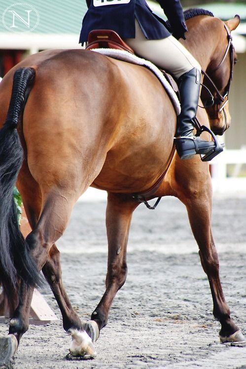 Fin häst