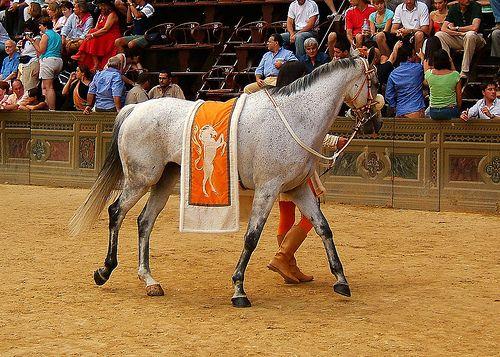 Leocorno's horse arrives at the piazza