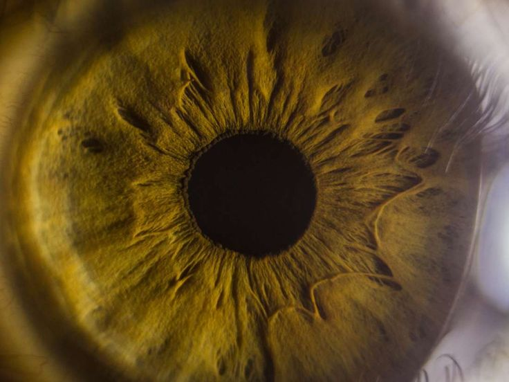 Eyes: Structure, function, and disease      The eyes are incredibly complex organs. In this article, we explain their anatomy, how they work, and describe some conditions that affect the eyes. https://www.medicalnewstoday.com/articles/320608.php?utm_campaign=crowdfire&utm_content=crowdfire&utm_medium=social&utm_source=pinterest