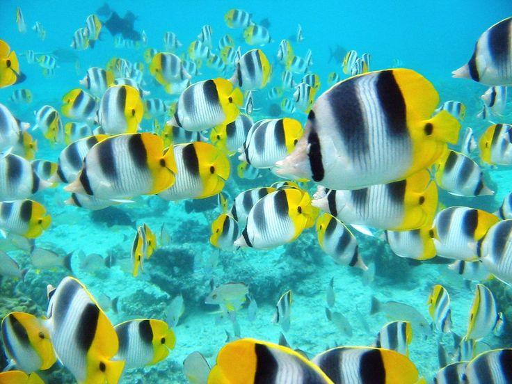 Kids-n-fun | Wallpaper School tropische vissen