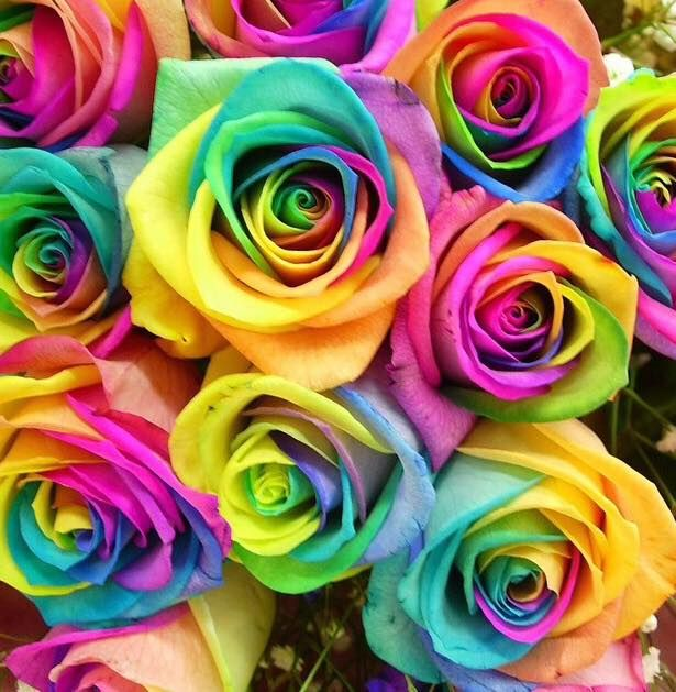 best 25 rainbow roses ideas on pinterest different