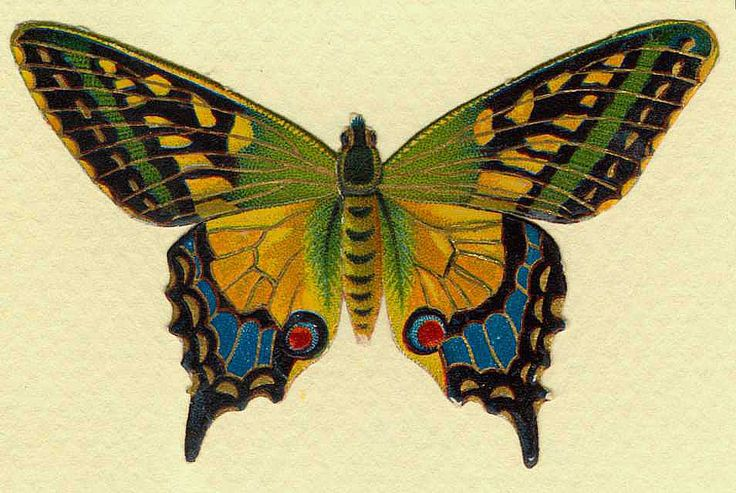 http://wordplay.hubpages.com/hub/butterfly-pictures