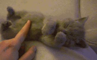 Funny Pictures of the day, 121 pics. Warning! Cute Kitten (Gif)