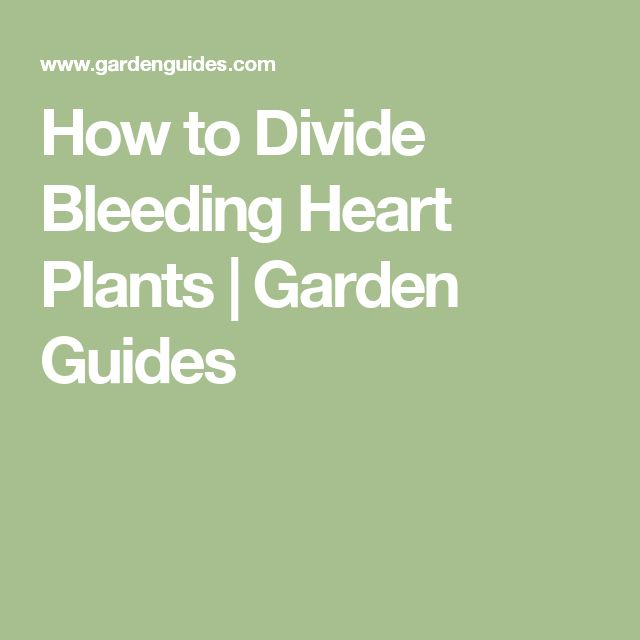 How to Divide Bleeding Heart Plants |  Garden Guides