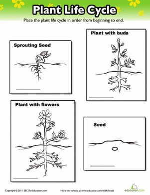 The 25+ best Plant life cycles ideas on Pinterest | Teaching ...