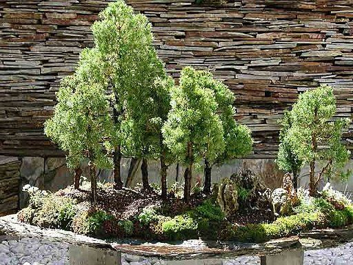 78 best images about bonsai therapy on pinterest trees bonsai trees and japanese - Bonsais de exterior ...