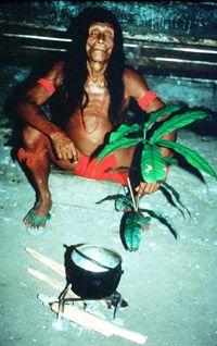 The Wayana of Suriname
