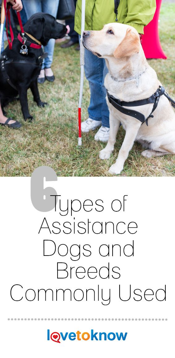 6 Types Of Assistance Dogs And Breeds Commonly Used With Images Assistance Dog Service Dogs Breeds Pets Dogs Breeds