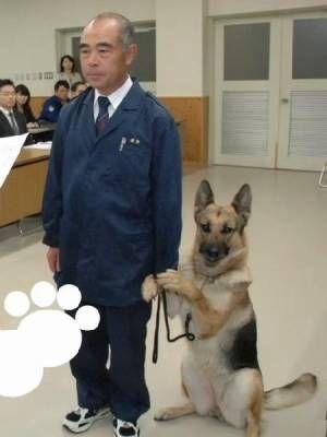 画像 : 可愛すぎる!犬画像まとめ【100枚】 - NAVER まとめ