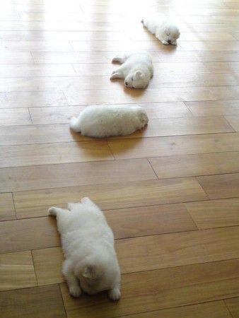 モフ...(<-----idk what this says, but I'm leaving it. lol) Puppies!