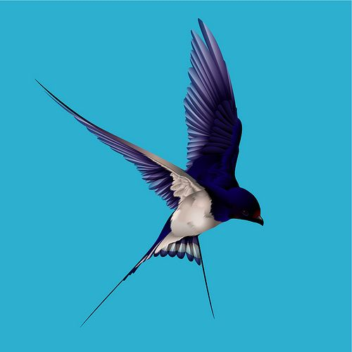 Barn Swallow by Graphic Stew, via Flickr                                                                                                                                                                                 More