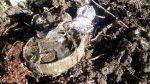 Ranjau darat hantam minibus di Somalia 17 orang tewas  MOGADISHU (Arrahmah.com)  Setidaknya 17 orang tewas dan lebih dari enam orang lainnya terluka ketika ranjau darat menghantam sebuah minibus yang membawa warga sipil di selatan wilayah Shabelle Somalia pada Kamis sore menurut polisi.  Addow Mohamed Wardhere seorang kapten polisi di wilayah tersebut mengatakan kepada Anadolu melalui telefon bahwa minibus itu sedang melakukan perjalanan dari Gobwayn Village menuju kota Merka di wilayah…