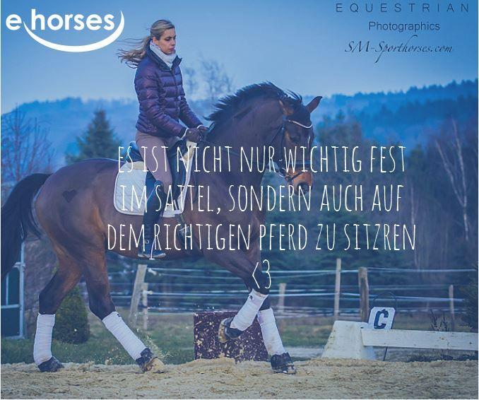 Finde dein richtiges Pferd auf www.ehorses.de