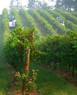 Yadkin Valley ... largest of the North Carolina Wine regions