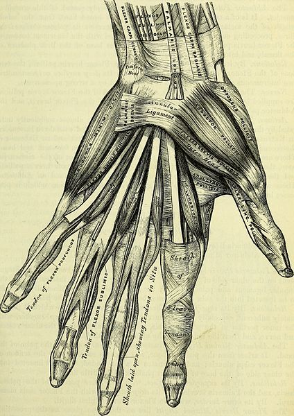 File:Anatomy, descriptive and surgical (electronic resource) (1860) (14578302757).jpg