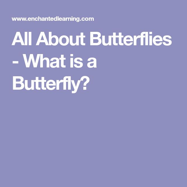 All About Butterflies - What is a Butterfly?