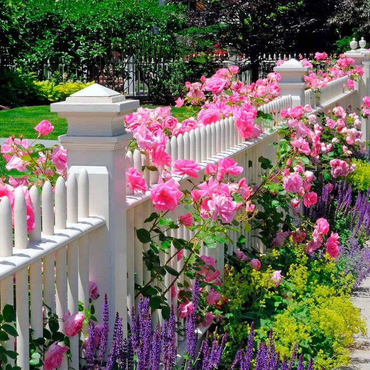 flower bed ideas front of house uk