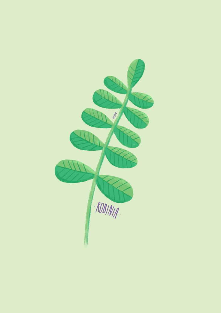 Minimal illustration of robinia 💚🌿 made during #project_plant challenge :)