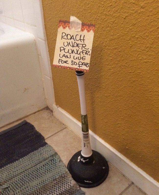Pest Control In Boutte Mail: 60 Best Pest Control Humor Images On Pinterest