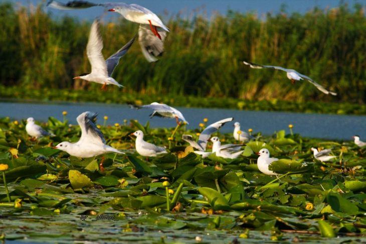 Intr-un top realizat de Asociatia Nationala a Agentiilor de Turism (ANAT), cea mai populara destinatie turistica din Romania in 2016 a fost Delta Dunarii. Rezer