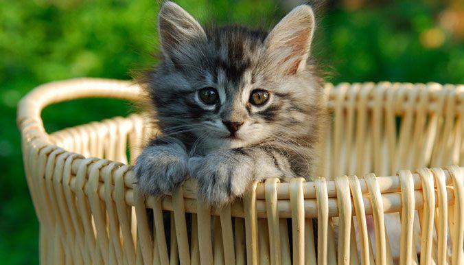 10 questions pour comprendre la nouvelle réglementation sur la vente de chiens et chats - Fondation 30 Millions d'Amis