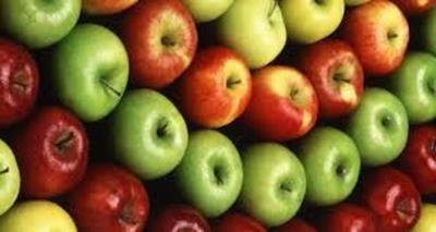 Como plantar semente de maçã - Plantar é Fácil