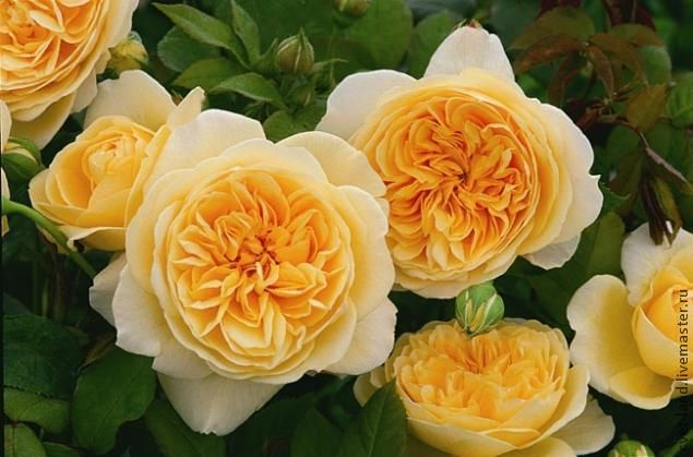 Пионовидная роза из фоамирана - Ярмарка Мастеров - ручная работа, handmade